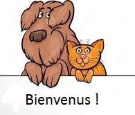 cane e gatto 4 - Copia
