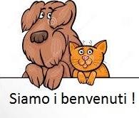 cane e gatto 4