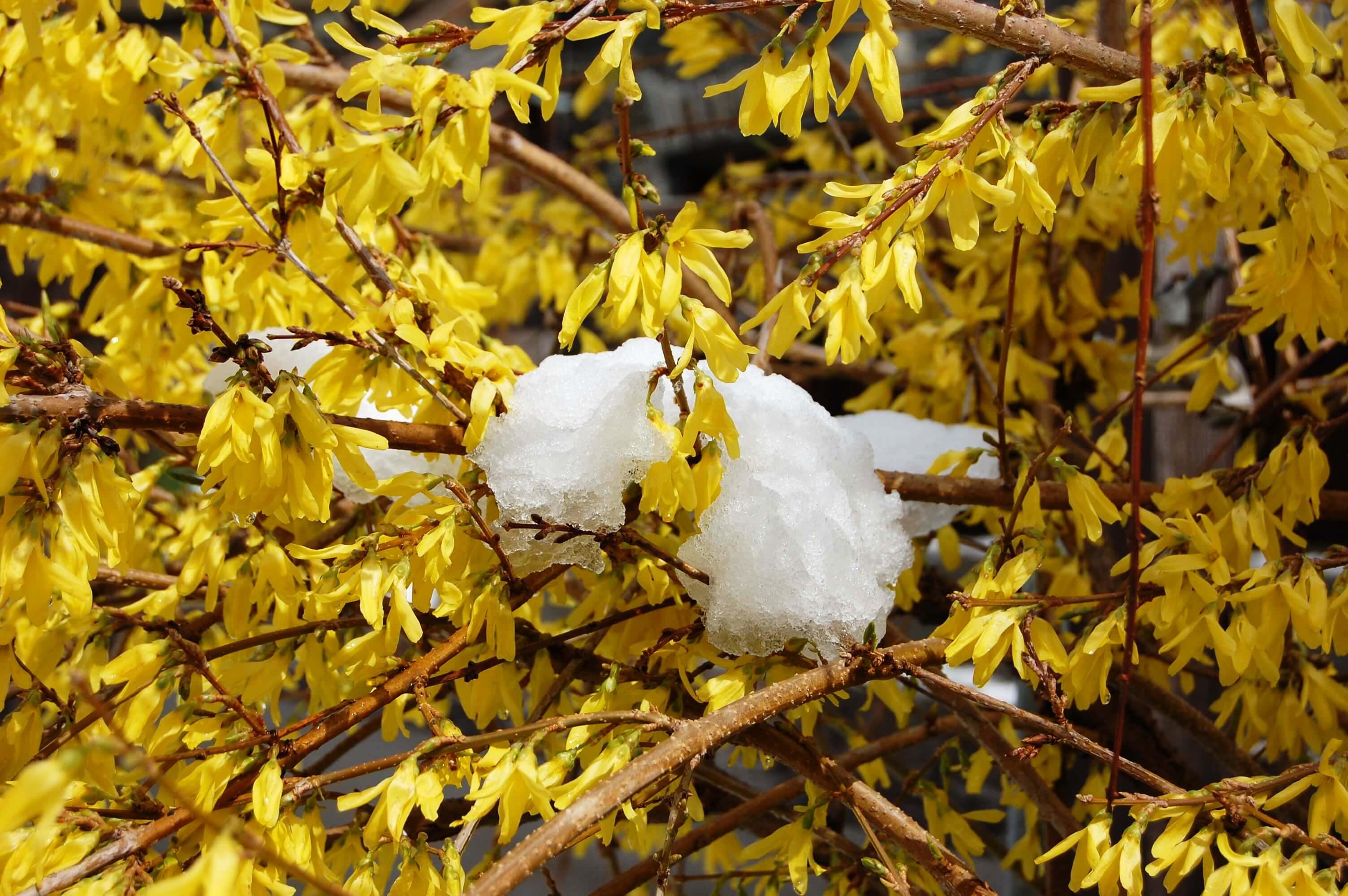 casegranparadiso-fiorigialli-coveyrand