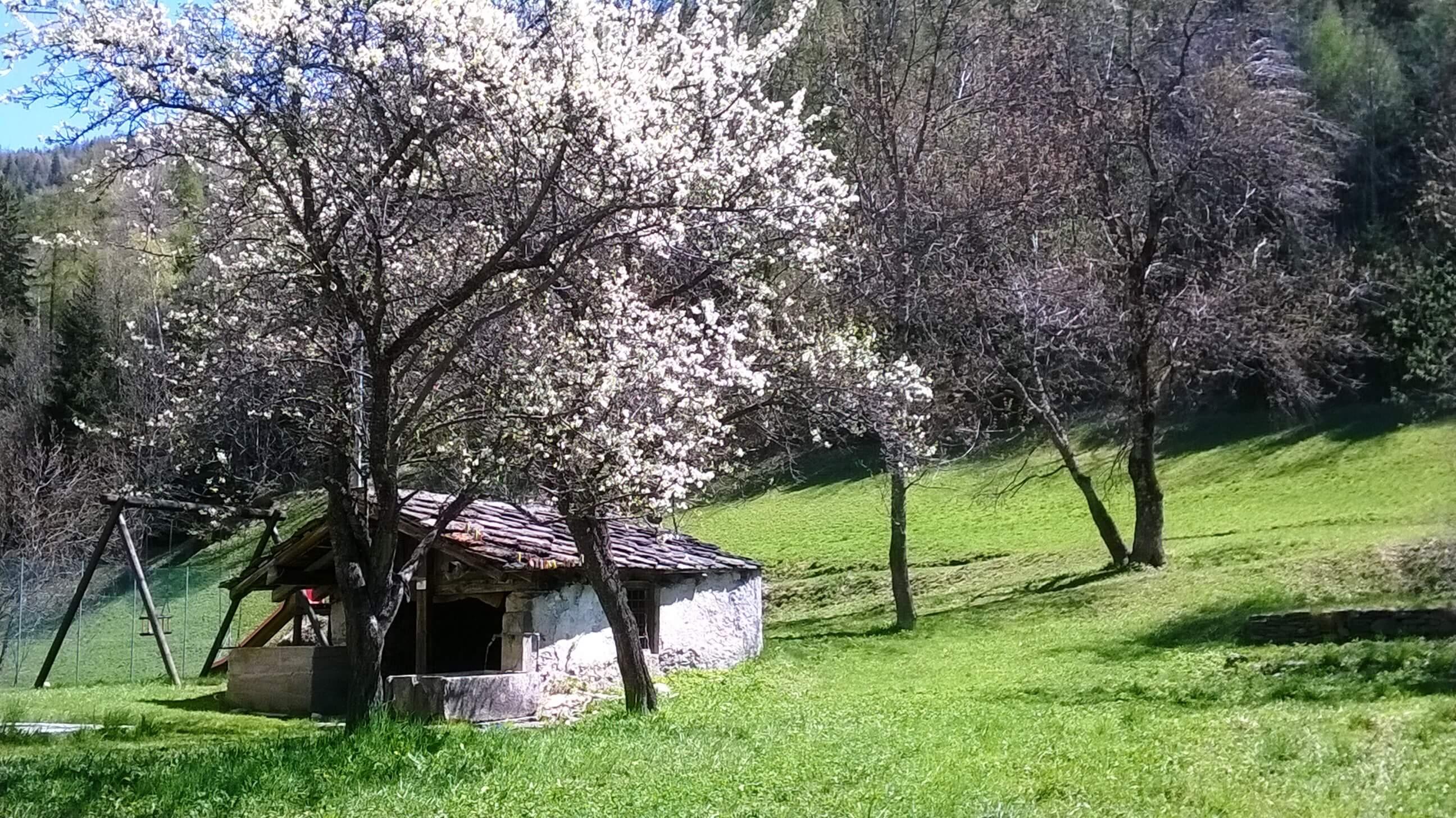 casegranparadiso-rhemessaintgeorges-primavera