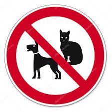 n cani e gatti